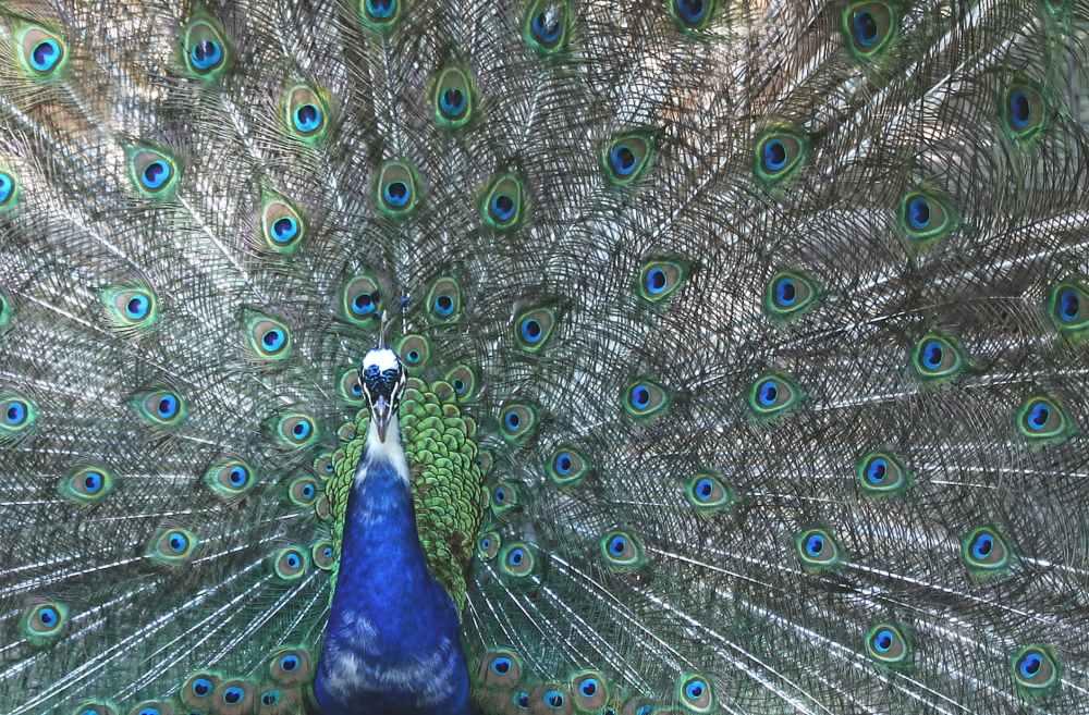 bird blue animal colorful