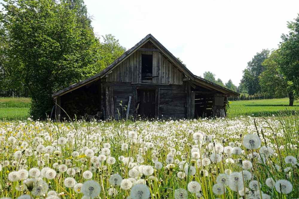 gray shed on white and green field near trees during daytime